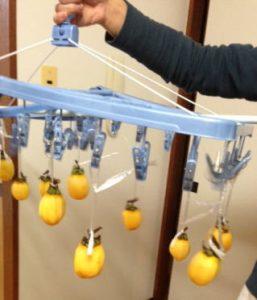 柿を熱湯消毒したら いざ!干します。 うちでは洗濯物を干すハンガーに。これはベランダ等で作る時に雨が降ったら室内に入れられるので便利です。