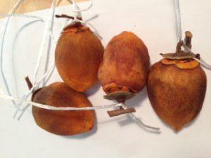 自家製の干し柿はフルーティーでスイーツのような甘さ。 渋柿が手に入る方はぜひお試し下さい。簡単に作れますよ。